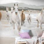 Kinderzimmer Pferd Kinderzimmer White Horse Mdchen Pferde Zimmer Regal Kinderzimmer Sofa Regale Weiß