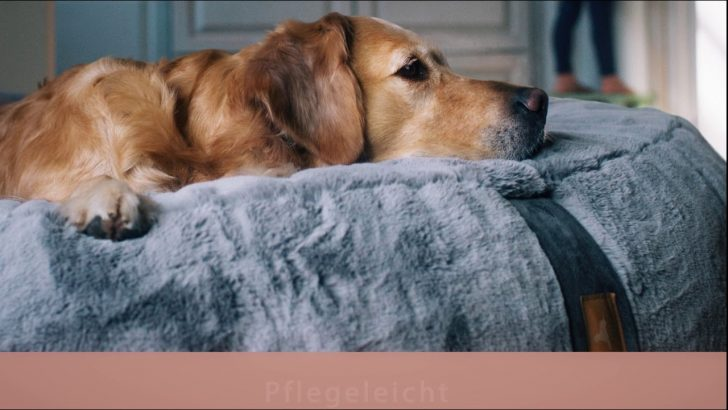 Medium Size of Hundebett Flocke 125 Cm 120 Zooplus Wolke 90 Kaufen Xxl Hyggbed Das Orthopdische Traum 2020 05 08 Wohnzimmer Hundebett Flocke