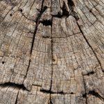 Schöne Tapeten Wohnzimmer Schöne Tapeten Schne Holz Fr Hintergrund Und Tapete Zwecke Schlafzimmer Betten Wohnzimmer Mein Schöner Garten Abo Für Küche Fototapeten Die
