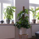 Deko Fensterbank Dekoration Pflanzen 3 Josie Loves Wohnzimmer Badezimmer Für Küche Schlafzimmer Wanddeko Wohnzimmer Deko Fensterbank