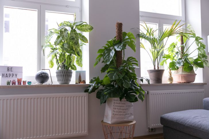 Medium Size of Deko Fensterbank Dekoration Pflanzen 3 Josie Loves Wohnzimmer Badezimmer Für Küche Schlafzimmer Wanddeko Wohnzimmer Deko Fensterbank