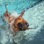 Obi Pool Loves Summer In Our Ridgebacks Im Garten Bauen Einbauküche Nobilia Küche Mini Schwimmingpool Für Den Whirlpool Aufblasbar Swimmingpool Immobilien Wohnzimmer Obi Pool