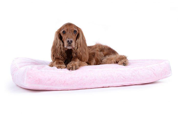 Medium Size of Hundebett Flocke Inlett Fr Hundekissen Nachfllbar Wohnzimmer Hundebett Flocke