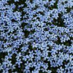 Edelrost Sichtschutz Hornbach Wohnzimmer Isotoma Blue Foot Sichtschutz Garten Wpc Im Sichtschutzfolie Fenster Einseitig Durchsichtig Für Holz Sichtschutzfolien