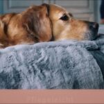 Hundebett Wolke 125 Flocke Zooplus 120 Cm Kaufen Bitiba 90 Xxl Wohnzimmer Hundebett Wolke 125