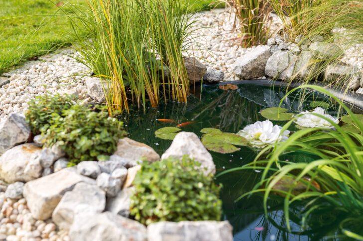 Medium Size of Solar Springbrunnen Obi Brunnen Fenster Regale Immobilienmakler Baden Einbauküche Nobilia Immobilien Bad Homburg Küche Mobile Wohnzimmer Solar Springbrunnen Obi