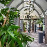 Eisenskulpturen Für Den Garten Wohnzimmer Ausstellung Ber Kletterpflanzen Im Botanischen Garten Stgallen Vinylboden Küche Schaukel Loungemöbel Günstig Regale Für Dachschrägen Liegestuhl Wellness