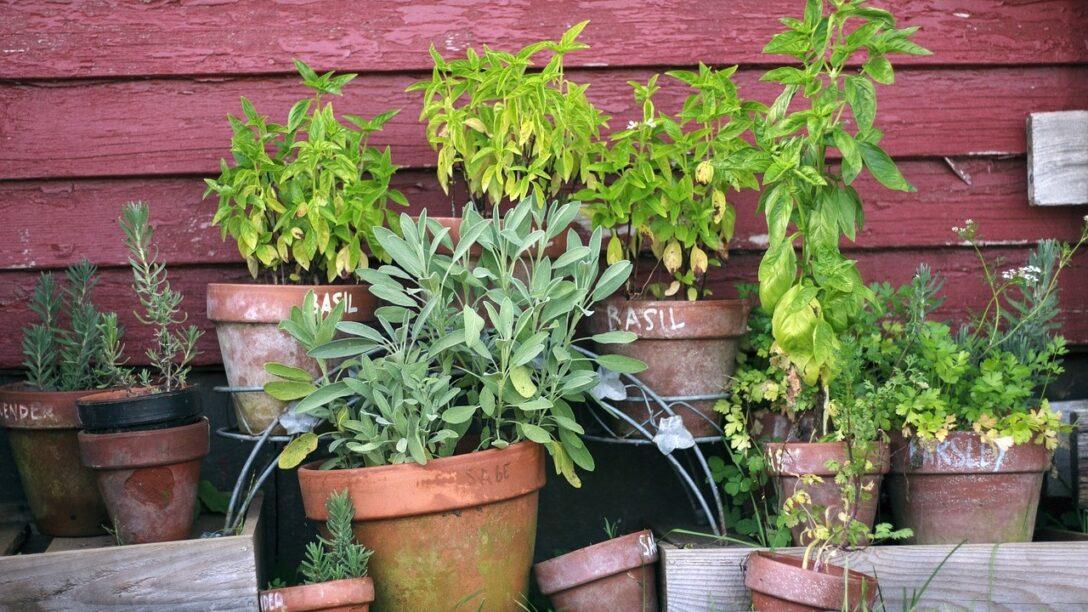 Large Size of Kruter Anpflanzen Mit Diesen Tipps Gelingt Es Ganz Leicht Salamander Küche Granitplatten Umziehen Tresen Single Schwingtür Tapete Einzelschränke Wohnzimmer Kräutertopf Küche Ikea