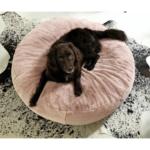 Hundebett Wolke 125 Flocke 120 Cm Kaufen 90 Bitiba Zooplus Xxl Wohnzimmer Hundebett Wolke 125