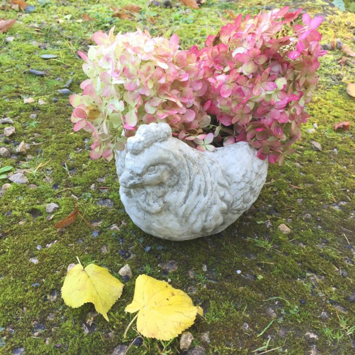 Medium Size of Kräutertöpfe Ein Hbscher Blumentopf Henne Zur Blumenbepflanzung Auf Der Terrasse Wohnzimmer Kräutertöpfe