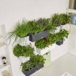 Kräutertöpfe Krutertpfe Von Lechuza Cube 14 Colortriple Green Wall Pflanzen Wohnzimmer Kräutertöpfe