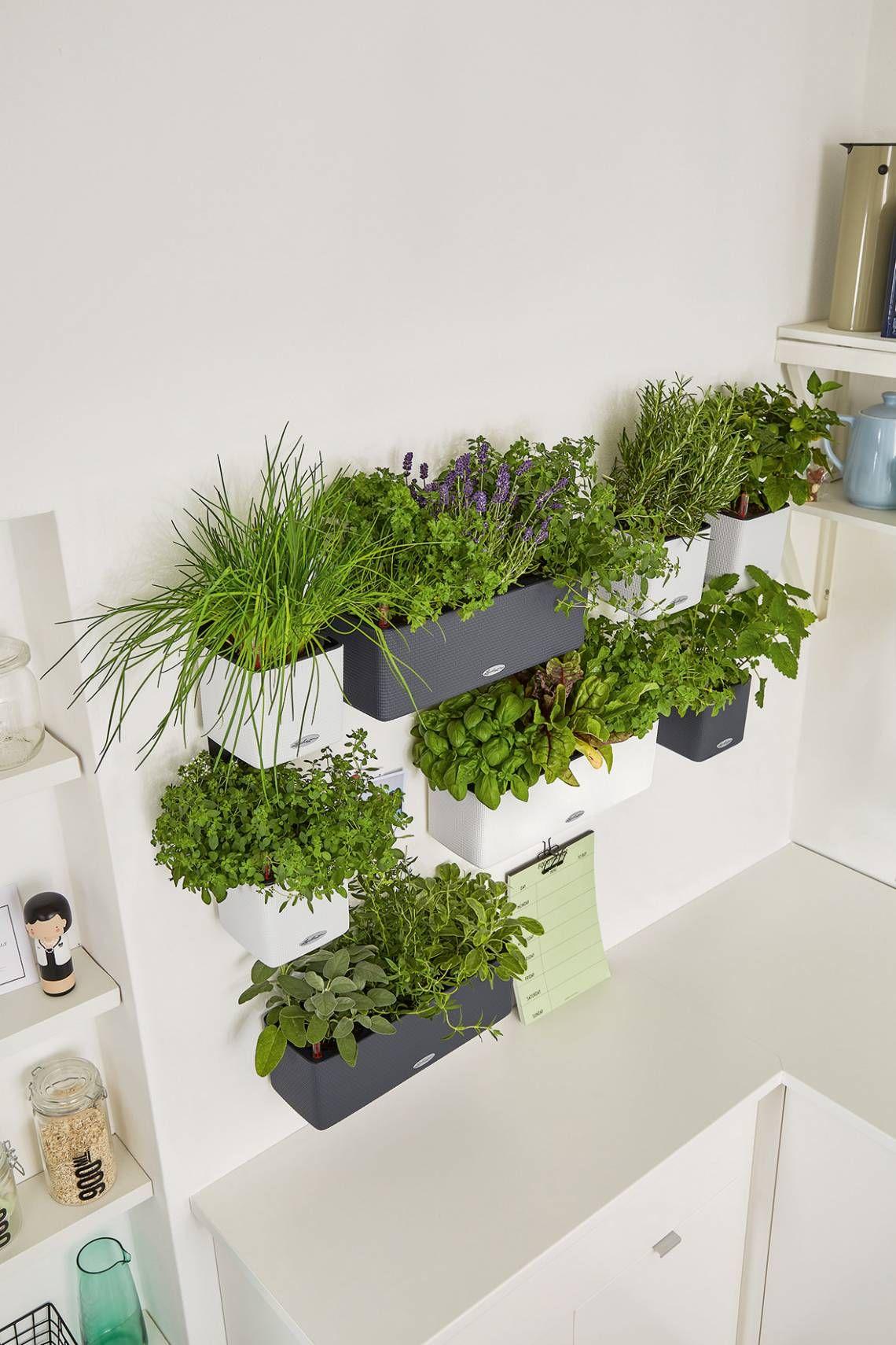 Full Size of Kräutertöpfe Krutertpfe Von Lechuza Cube 14 Colortriple Green Wall Pflanzen Wohnzimmer Kräutertöpfe