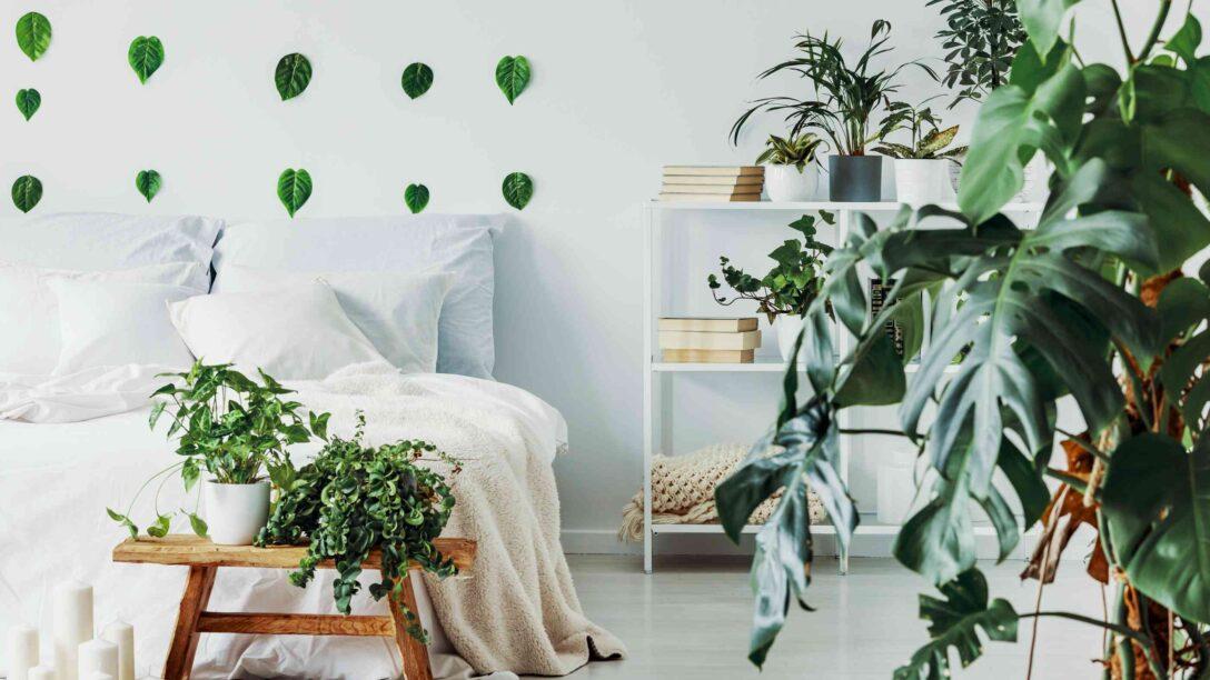 Large Size of Schlafzimmer Tapeten 2020 Wohntrend Urban Jungle So Bringt Ihr Tropenflair In Eure Wohnung Komplette Schimmel Im Fototapeten Wohnzimmer Schranksysteme Komplett Wohnzimmer Schlafzimmer Tapeten 2020