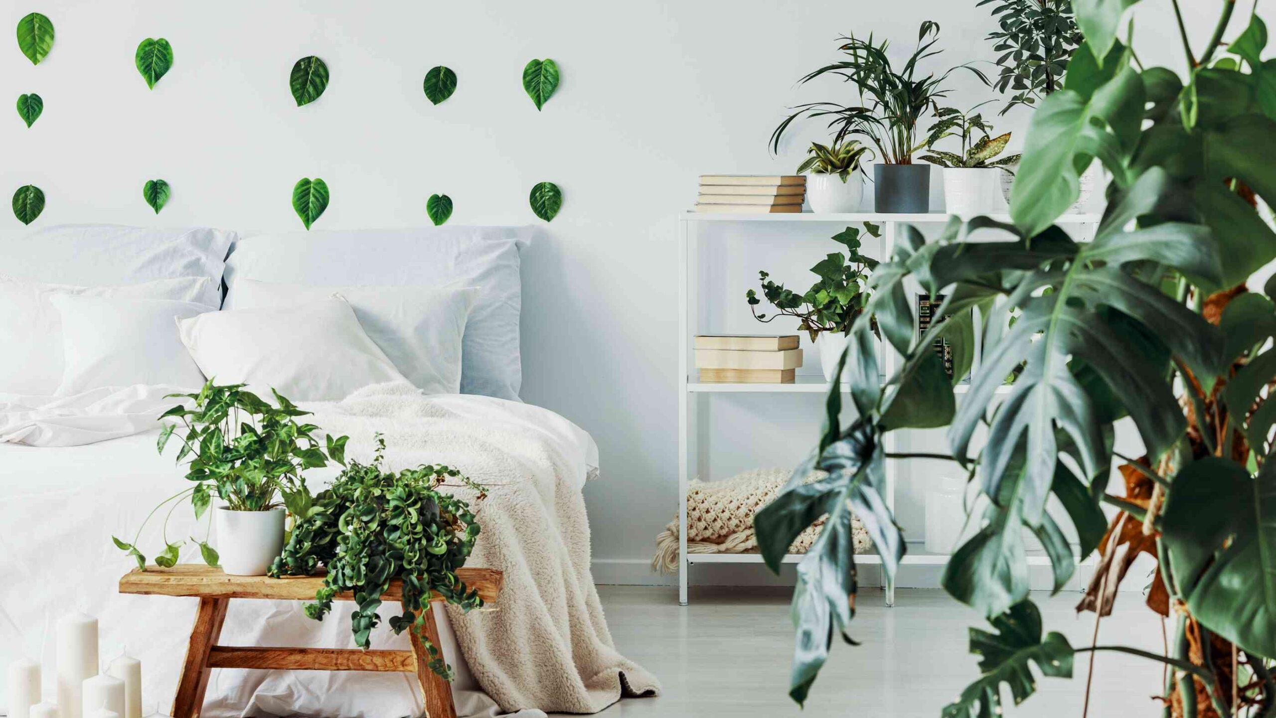 Full Size of Schlafzimmer Tapeten 2020 Wohntrend Urban Jungle So Bringt Ihr Tropenflair In Eure Wohnung Komplette Schimmel Im Fototapeten Wohnzimmer Schranksysteme Komplett Wohnzimmer Schlafzimmer Tapeten 2020