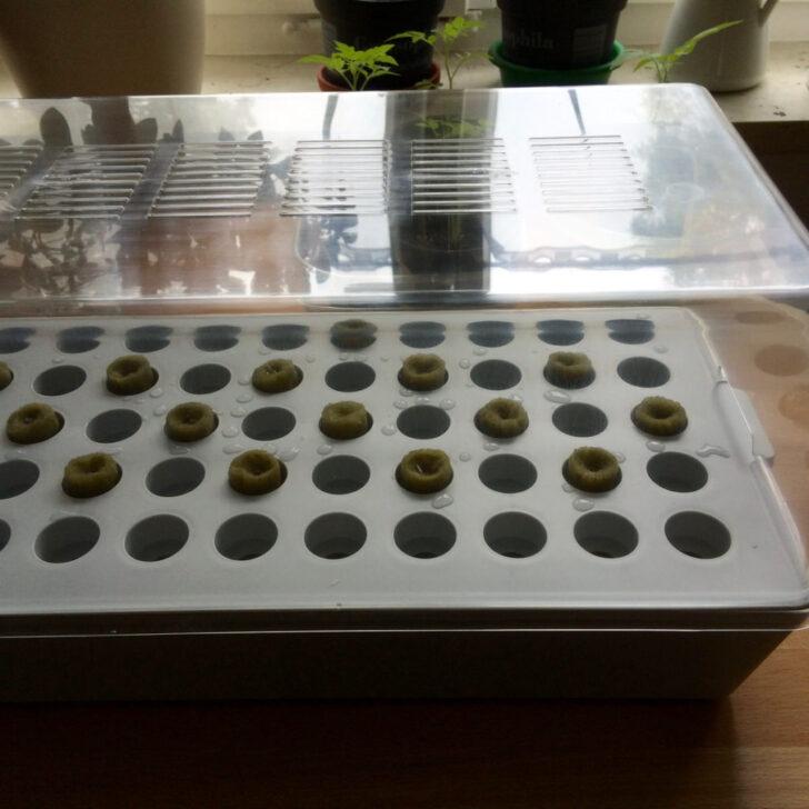 Medium Size of Gemse Ohne Erde Das Ikea Hydrokultursystem Im Beetfreunde Test Küche Kaufen Betten 160x200 Bei Kosten Miniküche Modulküche Sofa Mit Schlaffunktion Wohnzimmer Kräutertopf Ikea