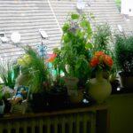 Küchenkräutergarten Wohnzimmer Das Tinchen On So