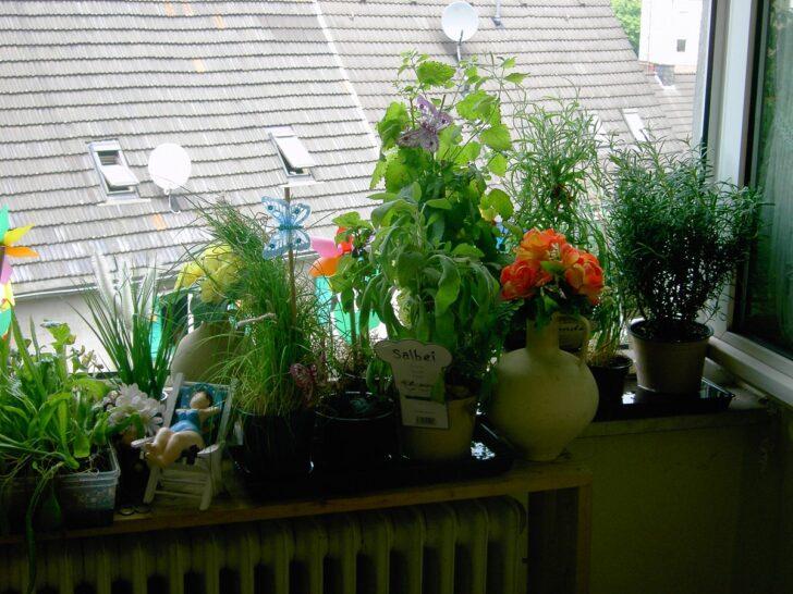 Medium Size of Das Tinchen On So Wohnzimmer Küchenkräutergarten