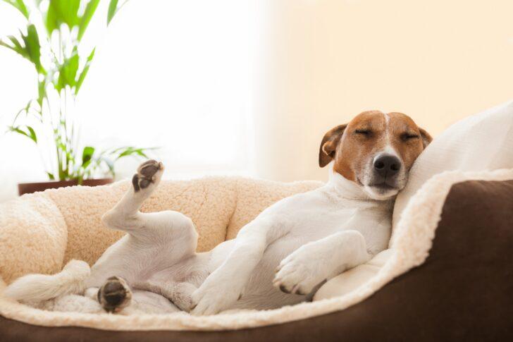Medium Size of Hundebett Wolke Zooplus Orthopdische Hundebetten Schmerzfreier Schlaf Wohnzimmer Hundebett Wolke Zooplus