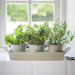 3 Krutertpfe Mit Tablett Gartenzauber Wohnzimmer Kräutertöpfe