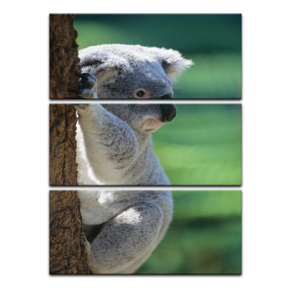 Full Size of Leinwandbild Koalabr Ii Glasbilder Bad Küche Wohnzimmer Glasbild 120x50