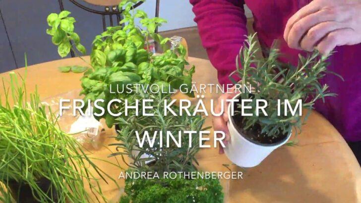 Medium Size of Frische Kruter Ernte Von Der Fensterbank So Wirds Gemacht Wohnzimmer Küchenkräutergarten