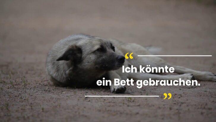 Medium Size of Hundebett Wolke Zooplus Hohes Test April Inkl Video Neue Produkte Wohnzimmer Hundebett Wolke Zooplus