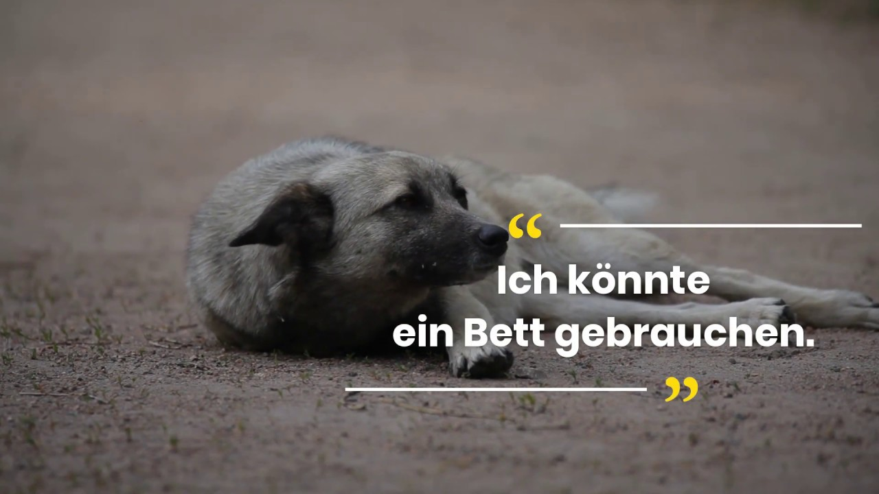 Full Size of Hundebett Wolke Zooplus Hohes Test April Inkl Video Neue Produkte Wohnzimmer Hundebett Wolke Zooplus