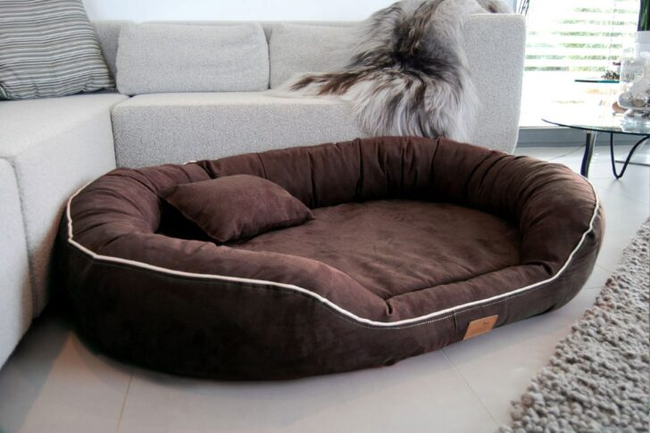Medium Size of Hundebett Flocke 90 Cm Test Zooplus Xxl Orthopdisches Marlon Visco Bett Liegehöhe 60 Regal 80 Hoch 50 Breit 40 Tiefe 30 20 Tief 25 Sofa Sitzhöhe 55 120 Wohnzimmer Hundebett Flocke 125 Cm