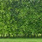Pflanzen Sichtschutz Garten Wohnzimmer Pflegeleichte Hecken Unsere Top 6 Als Sichtschutz Plantura Spielanlage Garten Stapelstühle Bewässerungssysteme Test Beistelltisch Ausziehtisch Pavillon Und