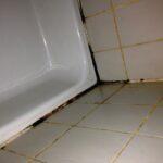 Schimmel Im Bad So Entfernen Sie Fenster Erneuern Kosten Wohnzimmer Fensterfugen Erneuern