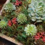 Vertikalbeet Selber Bauen Vertikal Garten Vertical Garden Indoor Watering Aussen Gardening Boxspring Bett Fenster Rolladen Nachträglich Einbauen Wohnzimmer Vertikalbeet Selber Bauen