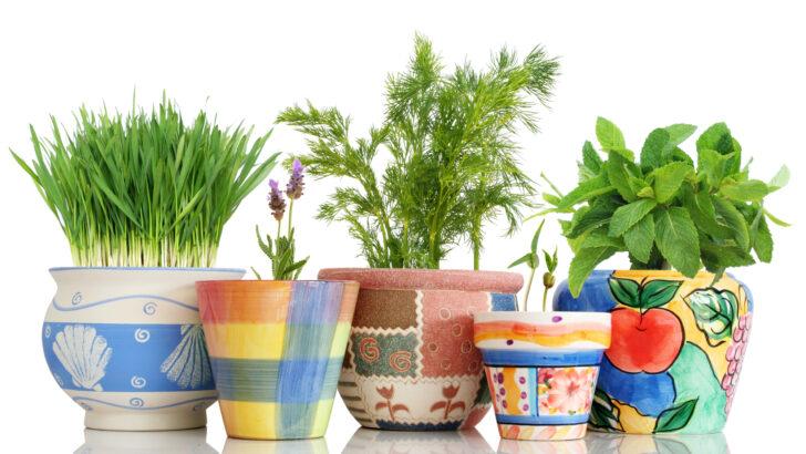 Kräutertopf Keramik Krutertopf Auswahl Waschbecken Küche Wohnzimmer Kräutertopf Keramik