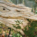 Gartenskulpturen Aus Holz Gartenskulptur Stein Und Glas Selber Machen Kaufen Skulpturen Garten Ratgeber Holzskulpturen Kunstwerke Natrlichen Rohstoffen Regal Wohnzimmer Gartenskulpturen Holz