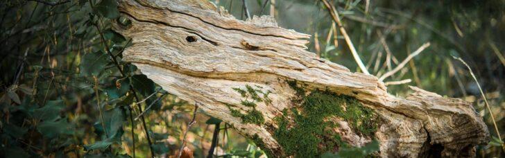 Medium Size of Gartenskulpturen Aus Holz Gartenskulptur Stein Und Glas Selber Machen Kaufen Skulpturen Garten Ratgeber Holzskulpturen Kunstwerke Natrlichen Rohstoffen Regal Wohnzimmer Gartenskulpturen Holz