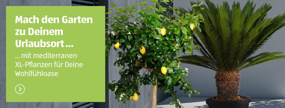 Large Size of Aldi Gartenliege 2020 Liefert Ihr Lieferservice Von Sd Relaxsessel Garten Wohnzimmer Aldi Gartenliege 2020