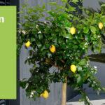Aldi Gartenliege 2020 Liefert Ihr Lieferservice Von Sd Relaxsessel Garten Wohnzimmer Aldi Gartenliege 2020