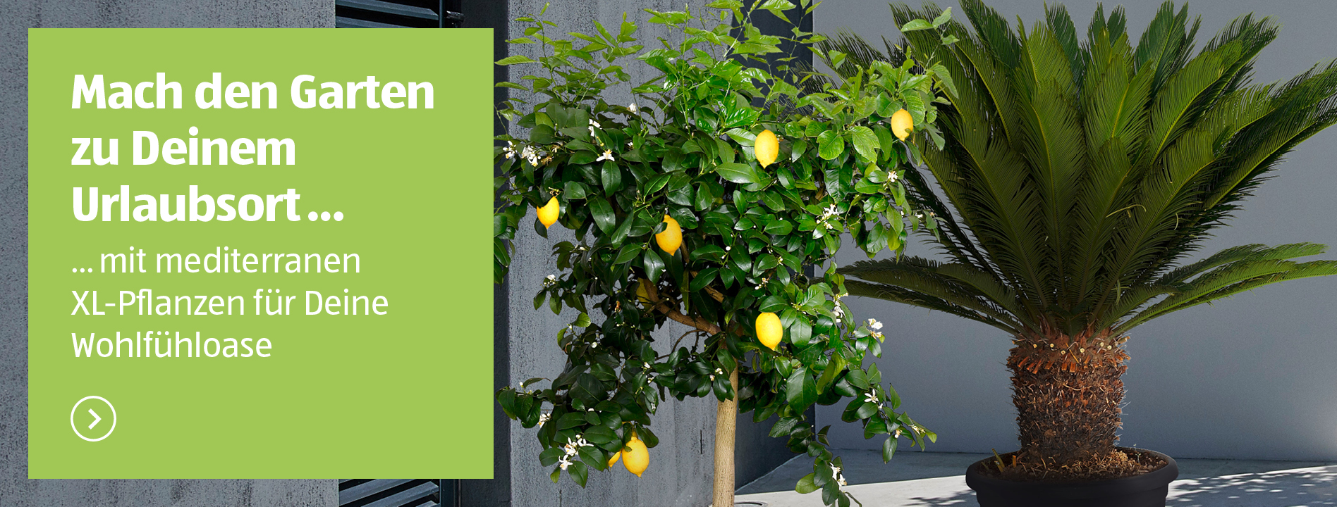 Full Size of Aldi Gartenliege 2020 Liefert Ihr Lieferservice Von Sd Relaxsessel Garten Wohnzimmer Aldi Gartenliege 2020