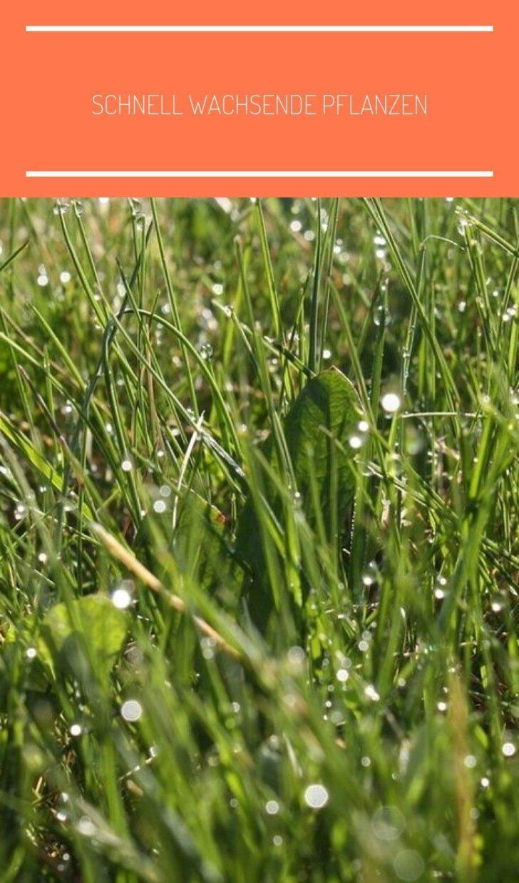 Medium Size of Pflanzen Sichtschutz Garten Im Mit Schnell Wachsenden Kräutergarten Küche Bewässerungssysteme Test Relaxsessel Aldi Led Spot Jacuzzi Whirlpool Aufblasbar Wohnzimmer Pflanzen Sichtschutz Garten