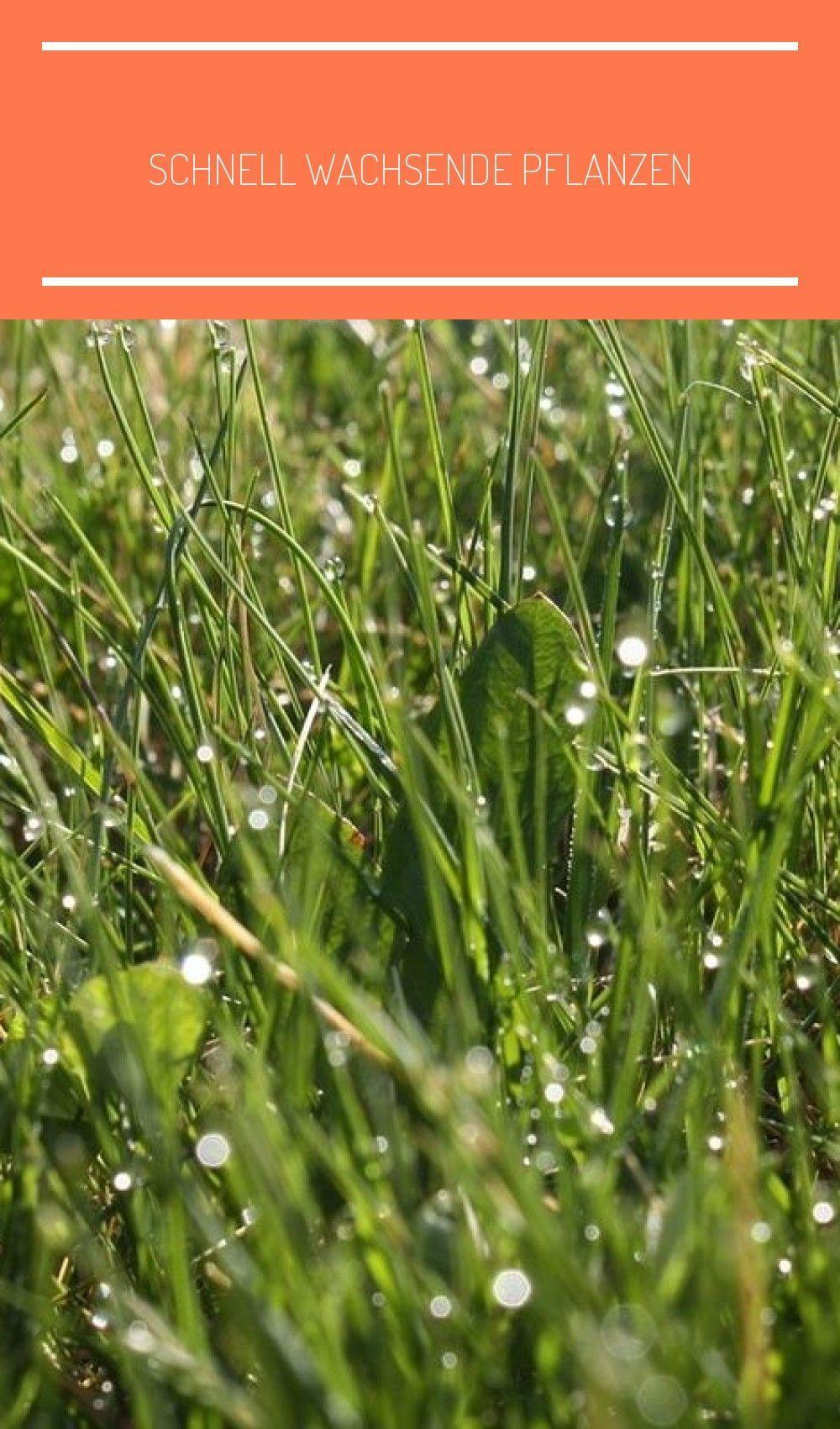 Full Size of Pflanzen Sichtschutz Garten Im Mit Schnell Wachsenden Kräutergarten Küche Bewässerungssysteme Test Relaxsessel Aldi Led Spot Jacuzzi Whirlpool Aufblasbar Wohnzimmer Pflanzen Sichtschutz Garten