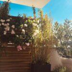 Bauhaus Sichtschutz Weide Wohnzimmer Balkon Mit Sichtschutz Bilder Ideen Couch Garten Wpc Fenster Holz Für Sichtschutzfolie Bauhaus Im Sichtschutzfolien Einseitig Durchsichtig