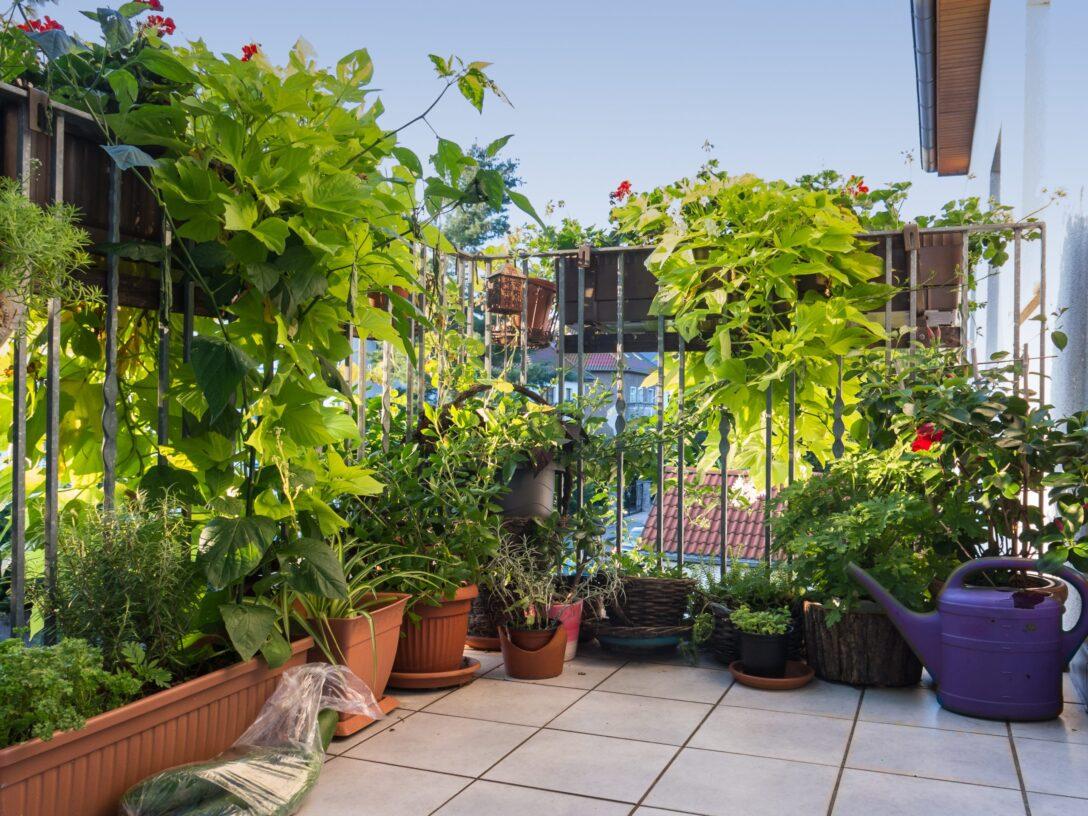 Large Size of Paravent Bambus Balkon Der Ideale Sichtschutz Von Materialauswahl Bis Zur Garten Bett Wohnzimmer Paravent Bambus Balkon