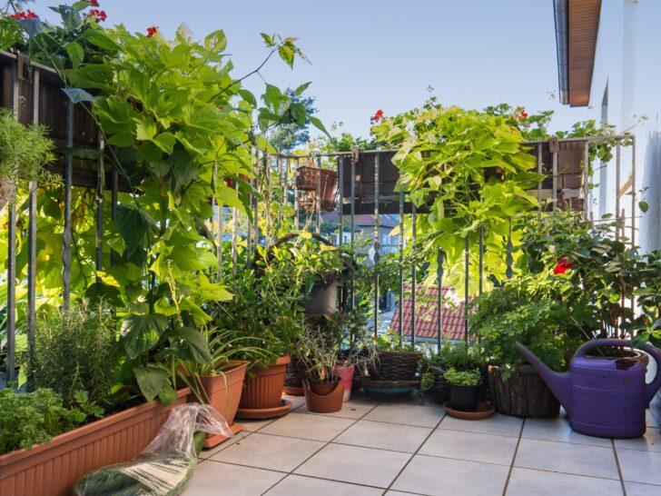 Medium Size of Paravent Bambus Balkon Der Ideale Sichtschutz Von Materialauswahl Bis Zur Garten Bett Wohnzimmer Paravent Bambus Balkon