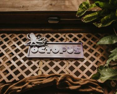 Octopus Betten Wohnzimmer Octopus Tranquilseas Hotel Resort Roatan Betten 140x200 Günstig Kaufen Somnus Ruf Mannheim Treca Bonprix Amazon 180x200 Japanische Für übergewichtige Meise