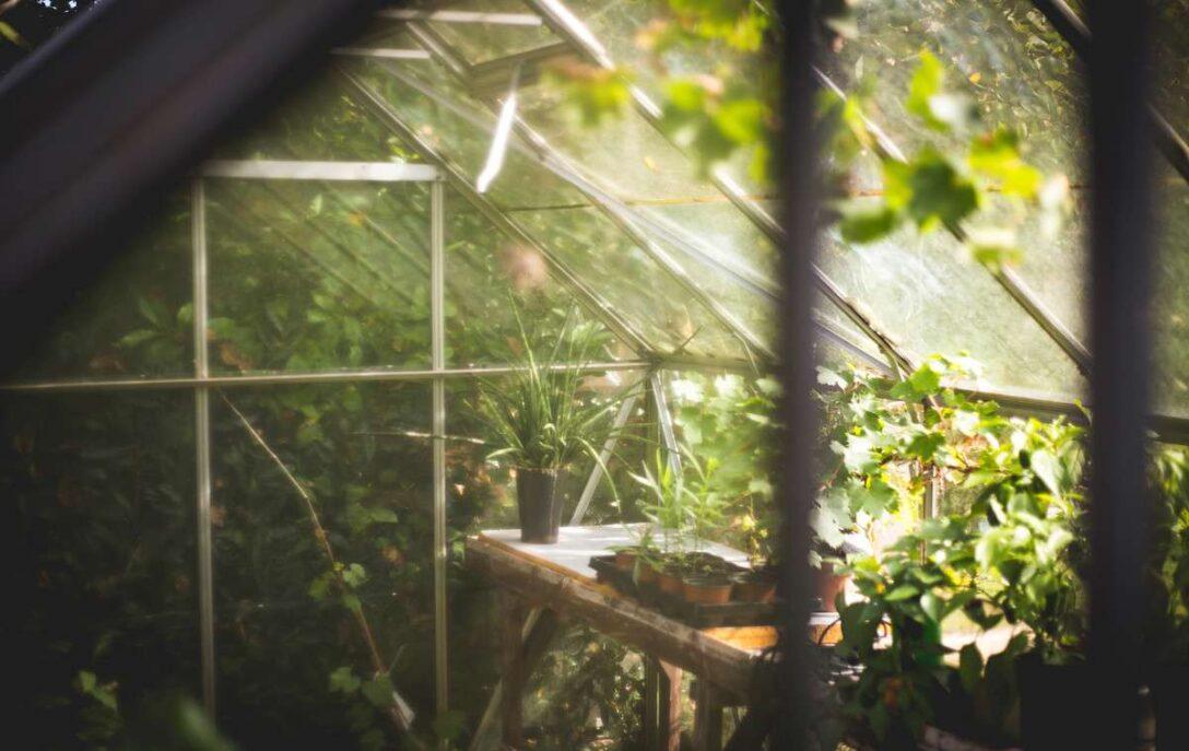 Large Size of Gewächshaus Holz Ein Gewchshaus Aus Selber Bauen Leben Wohnen Magazin Küche Weiß Alu Fenster Garten Regale Holzbank Vollholzküche Esstisch Holzplatte Bett Wohnzimmer Gewächshaus Holz