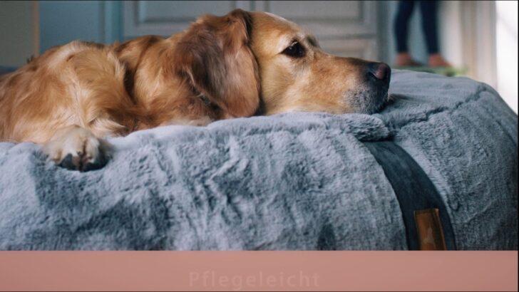 Medium Size of Hundebett Wolke Zooplus Flocke Xxl Bitiba 125 Cm 120 Kaufen 90 Wohnzimmer Hundebett Wolke Zooplus