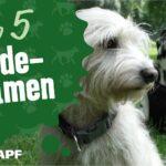 Hundenamen Von A Bis Z Finde Den Besten Namen Fr Deinen Hund Wohnzimmer Hundebett Wolke Zooplus