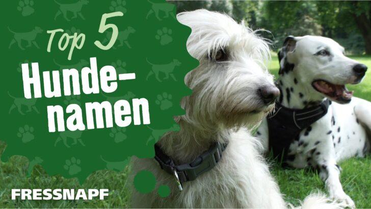 Medium Size of Hundenamen Von A Bis Z Finde Den Besten Namen Fr Deinen Hund Wohnzimmer Hundebett Wolke Zooplus
