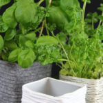 Tetrapack Wird Krutertopf Wohnzimmer Küchenkräutergarten