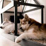 So Einfach Kann Man Sich Eine Moderne Hundehtte Fr Wohnung Landhausküche Weiß Landhaus Schlafzimmer Sofa Esstisch Ausziehbar Massiv Winkhaus Fenster Rund Wohnzimmer Hundebett Aus Paletten