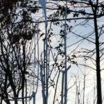 Eisenskulpturen Für Den Garten Ohne Titel Christiane Ldtke Und Landschaftsbau Hamburg Bewässerung Vinylboden Badezimmer Hussen Sofa Holzhäuser Trennwände Wohnzimmer Eisenskulpturen Für Den Garten